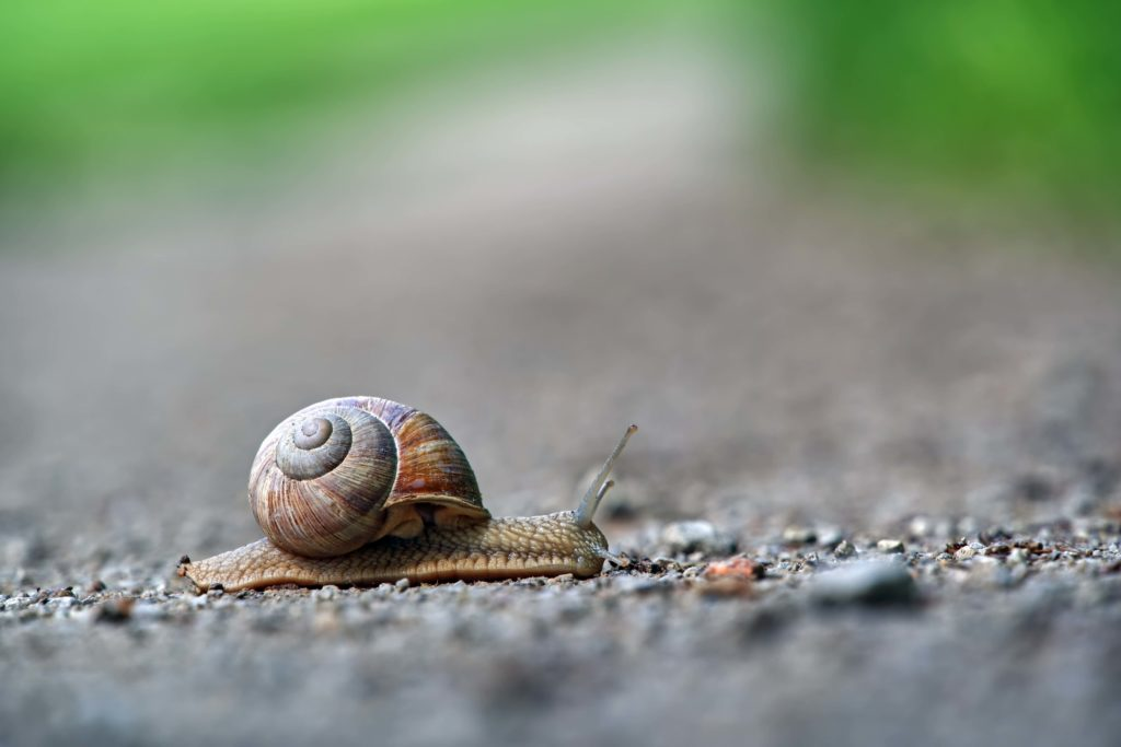 escargot long comme la liste d'attente parcoursup